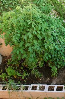 Garden Update II