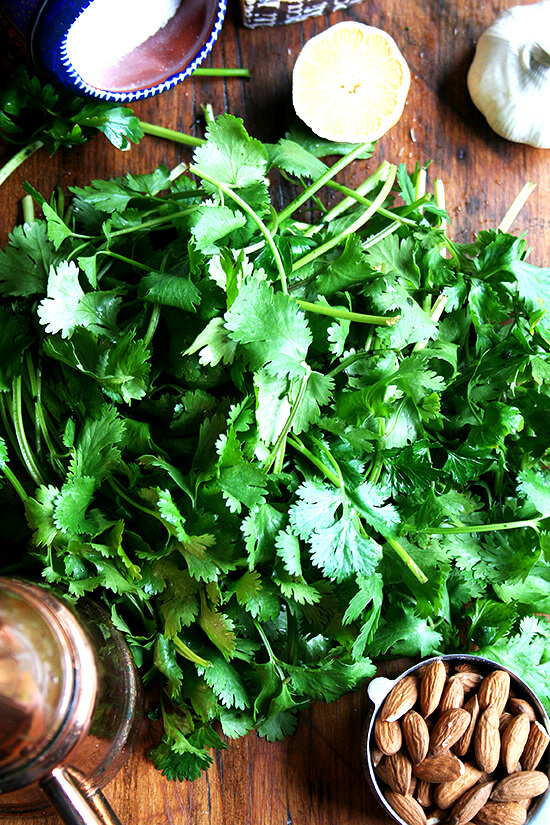 cilantro pesto ingredients