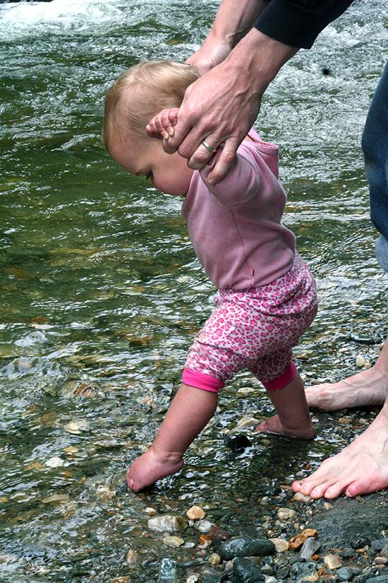 wren in water
